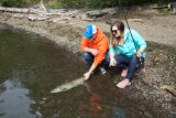 Anglers release a salmon