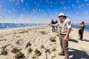 Employee explains shorebird nesting area to visitors