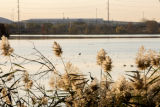 Scenic view of John Heinz National Wildlife Refuge