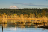 Wetland at Nisqually National Wildlife Refuge