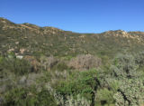 Coastal sage scrub and oak riparian woodlands