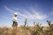 Employee spraying thistles at refuge