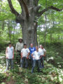 Crew takes a break from a site by a large White oak tree