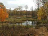Autumn at Clearwater County Wetland Protection Area