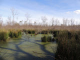Cypress studded lake at Trinity National Wildlife Refuge