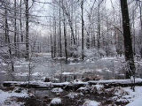 Winter at Great Swamp National Wildlife Refuge