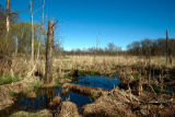 Wetland at Great Swamp National Wildlife Refuge