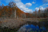 Fall colors at Great Swamp National Wildlife Refuge