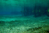 Underwater wide shot of Florida Spring