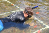 Snorkeling to find freshwater mussels