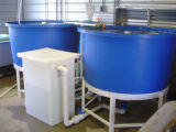 Large recirculating propagation system