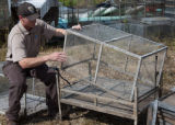 Service biologist inspecting a spacer cage