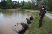 Warm Springs Hatchery staff checking nets for channel catfish