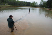 Staff at Warm Springs Hatchery checking nets for channel catfish
