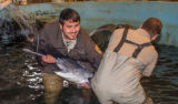 Hatchery workers spawning paddlefish