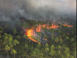 Prescribed fire forest aerial ignitions