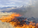 Prescribed fire burns with snow capped peaks in background