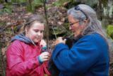 Tagging of black bear cubs