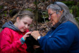 Preparing to tag black bear cub