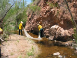 Prescribed burn fish rescue at Cave Creek Complex