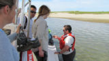 Refuge biologist shows staff a juvenile horseshoe crab