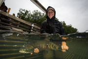 Biologist releases salmon