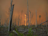 Fire whirl at Great Dismal Swamp National Wildlife Refuge