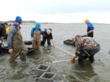 Refuge staff and volunteers and The Nature Conservancy volunteers build oyster castles