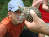 Cub scout with Eastern box turtle