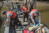 U.S. Fish and Wildlife Service workers measure invasive Silver carp