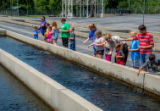 Children feeding fish at raceways