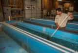 FWS staff employee cleans fish raceways