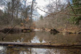 Beaver dams on either side of stream