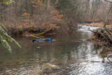 Photographer taking pictures of brook trout in Seneca Creek