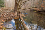 Photographer taking underwater pictures of brook trout in Seneca Creek