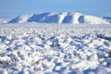 Snow covered sage steppe