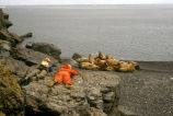 Hall Island,Bering Sea 1984