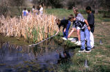 Children netting in pond on Two Ponds National Wildlife Refuge