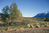 Matanuska Valley Hay Field