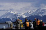 Kachemak Bay Shorebird Festival,Shorebird viewers in Homer, Alaska