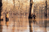 WO 299 Hunters in Flooded Timber