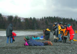 Homer, Shorebird watching in Kachemak Bay