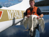WOE175  Pilot-Biologist Capture Trumpeter Swan for Banding