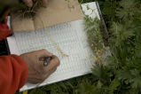 Aiktak plant identification data collection