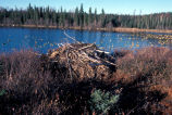 Beaver Lodge on Martin Lake