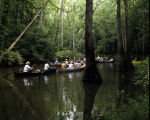 Canoeing at Bond Swamp National Wildlife Refuge