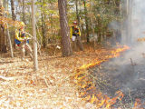 Joint Fire Science Program (JFSP) Prescribed burn at Chesapeake Marshlands National Wildlife...