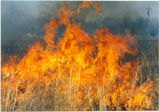 Prescribed Burn at Chesapeake Marshlands National Wildlife Refuge Complex