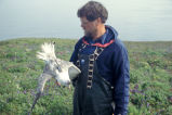 Northern fulmar with transmitter