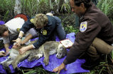 Florida Panther Research